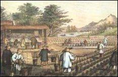 Dějiny čaje