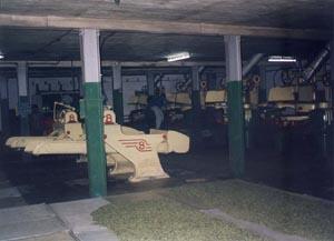 Továrna za zpracování čajových lístků